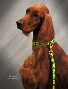 Emmy in Baby Grass designer colors Diamondback Braided collar and leash