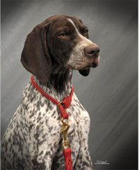 WintercreekShorthairs takes Dog Sports Designs from field to ring.  30 years of Outstanding Dual Quality Shorthairs