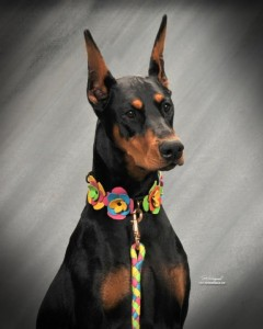 Tavi in Woofstock Collar