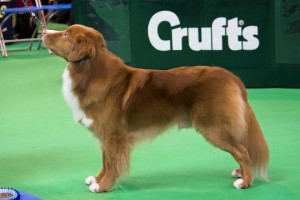 Wrangler at Crufts